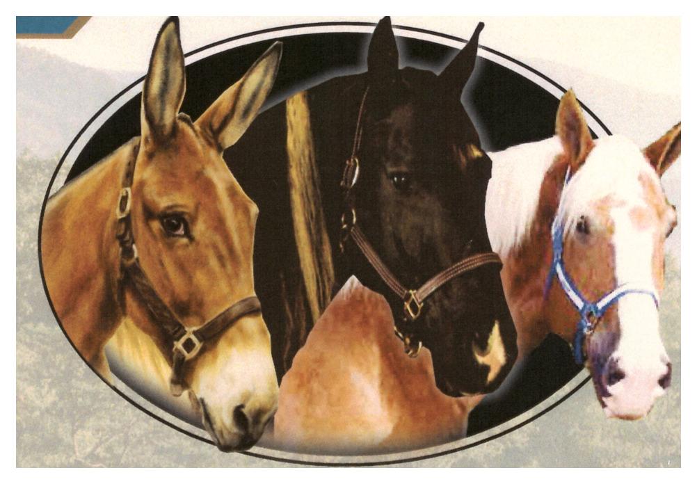 2018 Horse & Mule pic